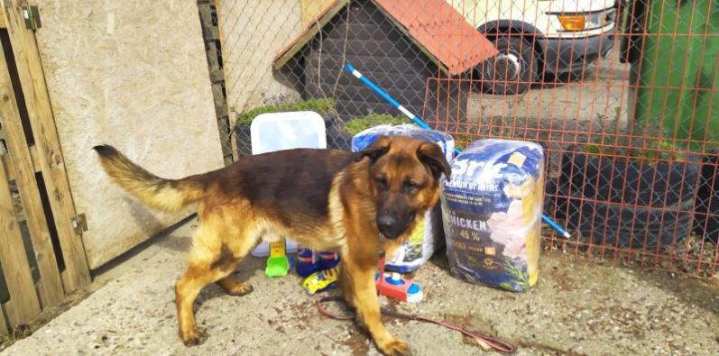 pomoc zwierzętom - veritas