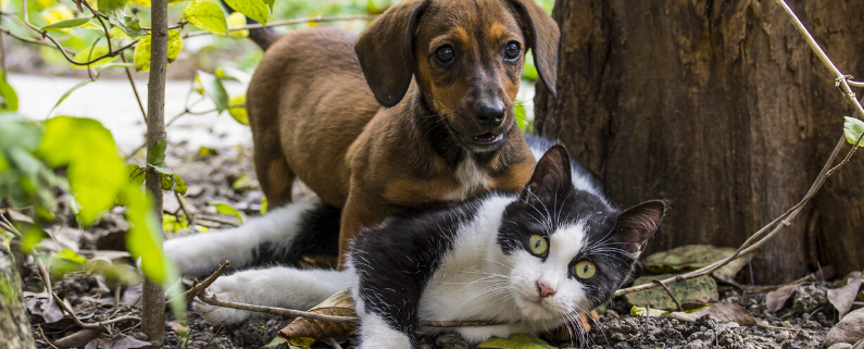 pomoc zwierzętom